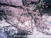 japanese holidays 2 Japanese Holidays
