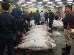 tsukiji 5 Tsukiji Fish Market