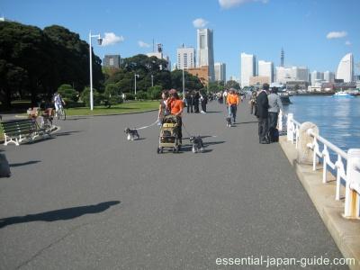 yamashita koen 2 Yamashita Park (Yamashita Koen)