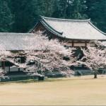 054 54 150x150 Nara Travel Guide