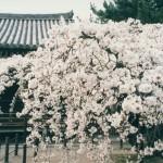 059 59 150x150 Nara Travel Guide